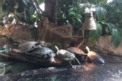 HdM Schildkröten