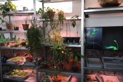 Pflanzen Zoom