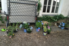 viele Blumen und Tisch