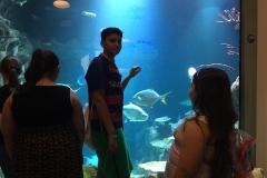 HdM NAvdeep Aquarium